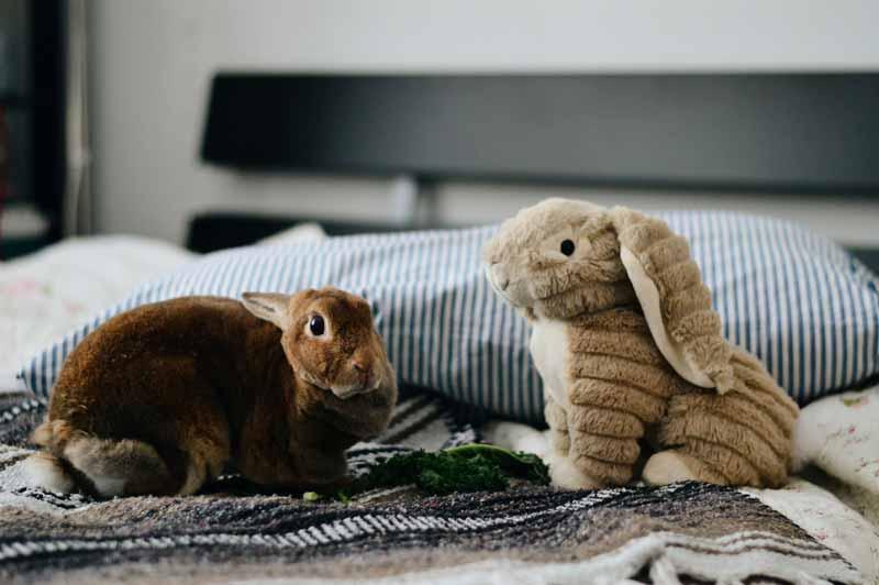 mascotas-en-casa-conejo