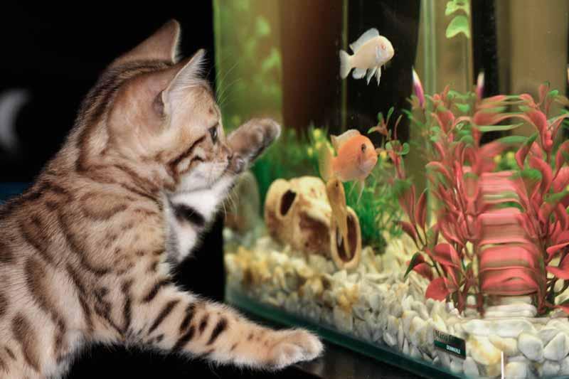 mascotas-en-casa-gato-y-peces